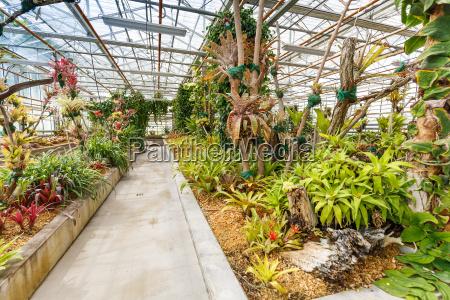 pflanzen im gewaechshaus