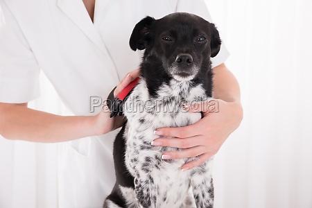 vet buersten des hundes haar