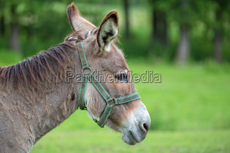 donkey in a clearing a portrait
