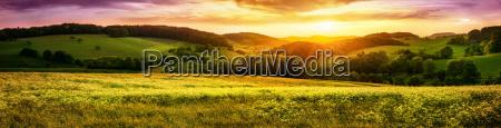 bluehende wiese bei sonnenuntergang ein panorama
