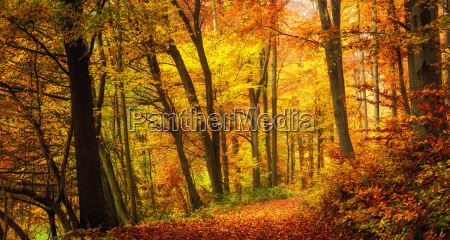 forest in autumn with pleasant warm