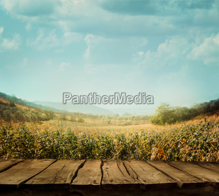 nature background with wood planks