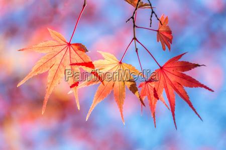 blatt baumblatt baum einzelbild einrahmen hintergrund