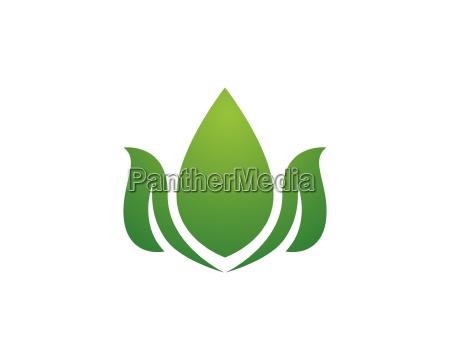 schoenheit vektor blumen design logo vorlage