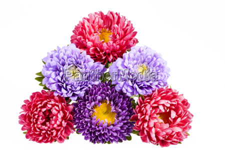 bouquet of colorful aster flowers on