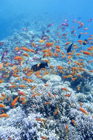 bunte korallenriff mit schwaermen von fischen