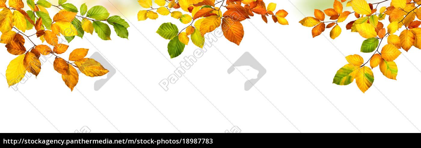 Herbst Hintergrund Mit Bunten Blattern Der Buche Auf Stockfoto