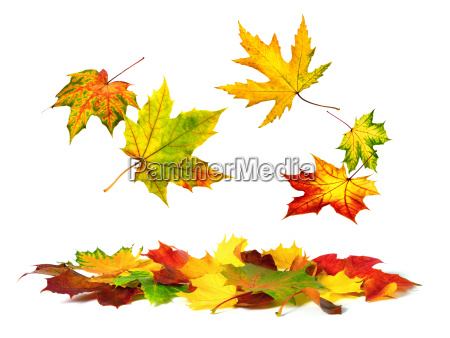 falling colorful autumn leaves on white