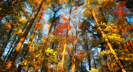 autumn scene in the forest the