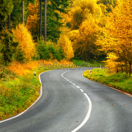 atmospheric winding road in autumn