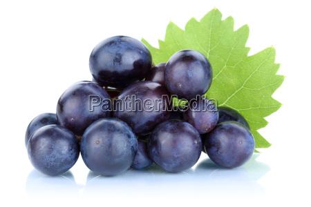 trauben weintrauben blau frische fruechte obst