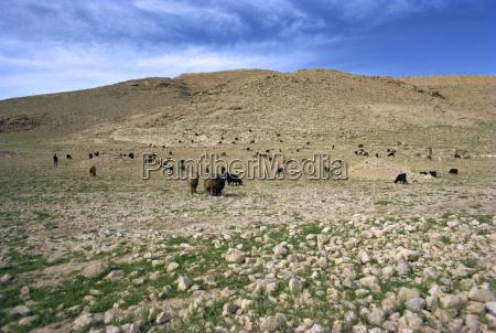 landschaft in der naehe von shirazirannaher
