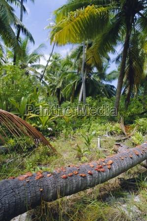 baum afrika palmen outdoor freiluft freiluftaktivitaet