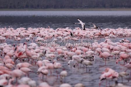 lake nakuru national park kenya east