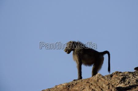 fahrt reisen afrika tiere namibia horizontal