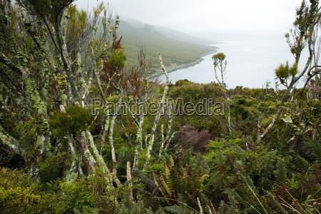 blume blumen pflanze flora horizontal outdoor