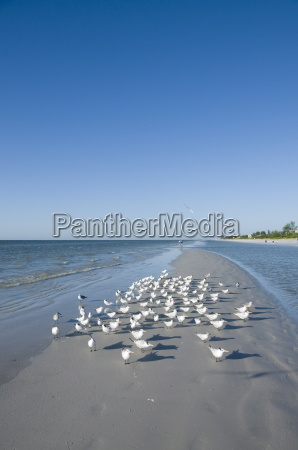 fahrt reisen vogel strand usa outdoor