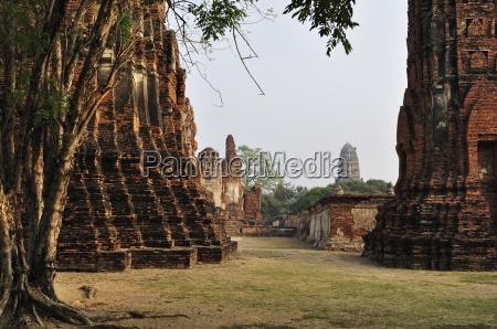 fahrt reisen religion baum asien horizontal