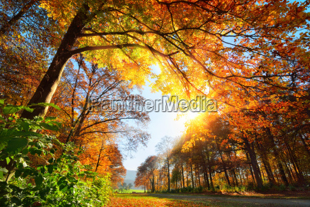 park in autumn with sun and