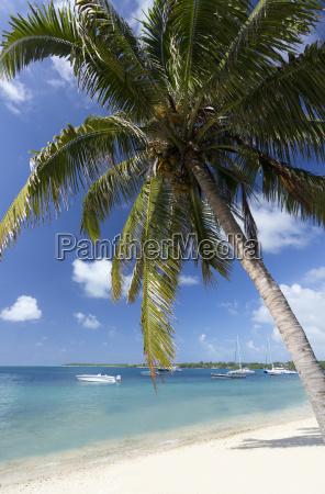 strandszene mit palmen blauer himmel und