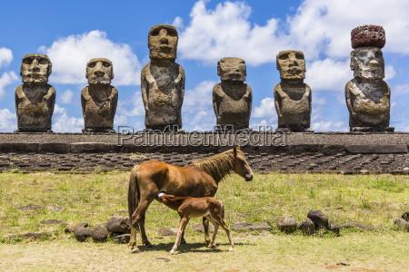 fahrt reisen farbe stein pferd ross