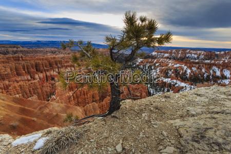 fahrt reisen farbe baum winter nationalpark