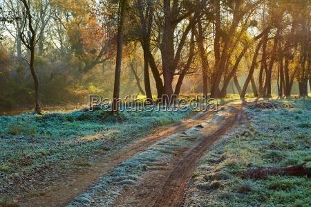 herbstmorgen landschaft