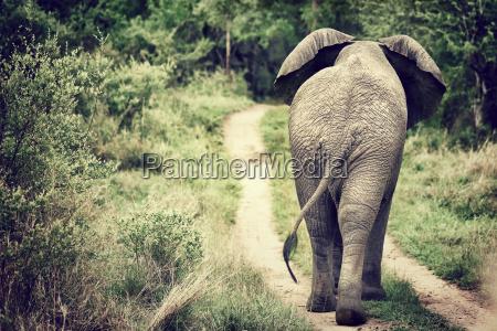 elefantenspaziergaenge in freier wildbahn