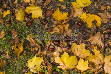 autumn natural arrangement
