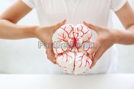 jak zbudowany jest ludzki mozg