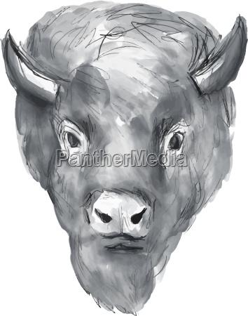 amerikanischer bison kopf aquarell