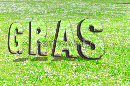 the word grass in green grass
