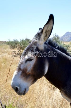 pferd ross tier saeugetier braun braeunlich