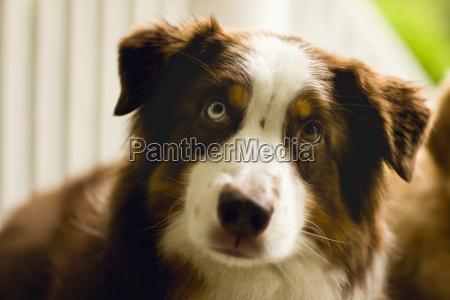 portraet eines hundes der entzueckend hoffnungsvoll
