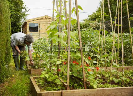 a man working in his garden