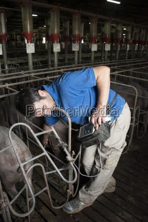 tier saeugetier landwirtschaft ackerbau spanien stall