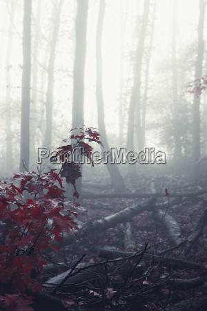baum winter blaetter nebel herbstlich outdoor