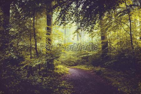 baum laubbaum laubwald outdoor freiluft freiluftaktivitaet