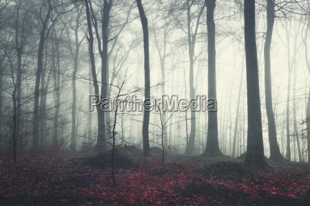 baum herbstlich laubwald deutschland brd bundesrepublik