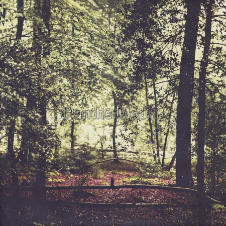laubwald im fruehling silhouette des vogels