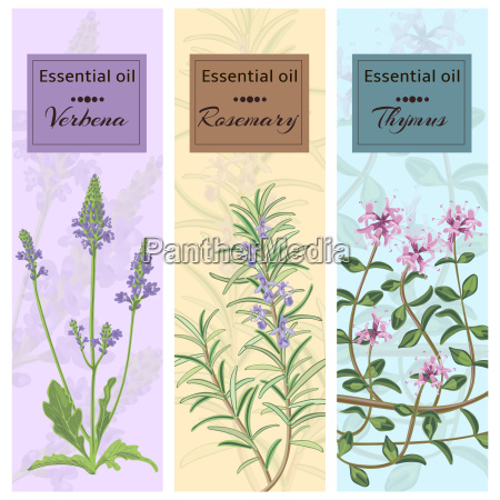 essential oil set collection