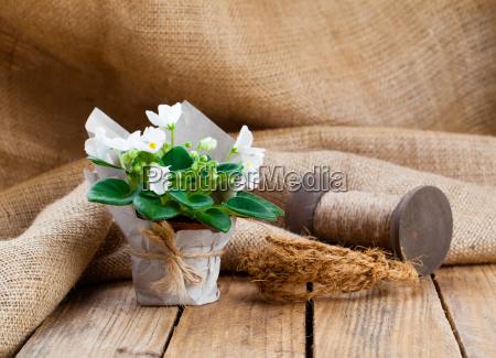 saintpaulias flowers in paper packagingon wood