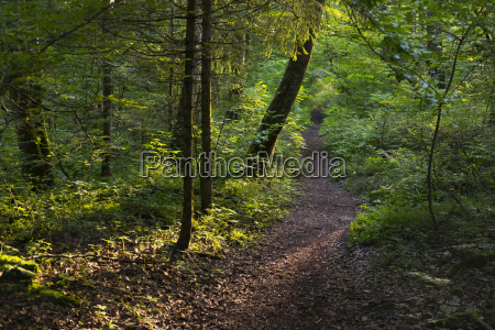 germany upper bavaria geretsried forest path