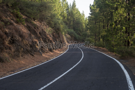 spain tenerife empty road forest