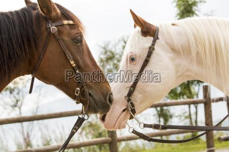 menschen leute personen mensch pferd ross