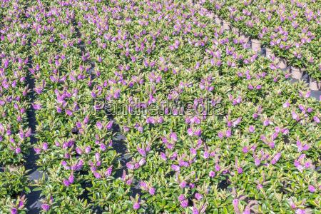 landwirtschaft ackerbau baumgarten kinderkrippe kindergarten pflanzen