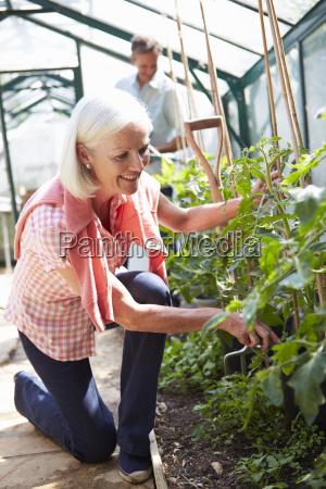 mittleren, alters, paar, nach, betreuung, tomaten - 19365994