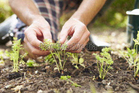 close up of man planting seedlings