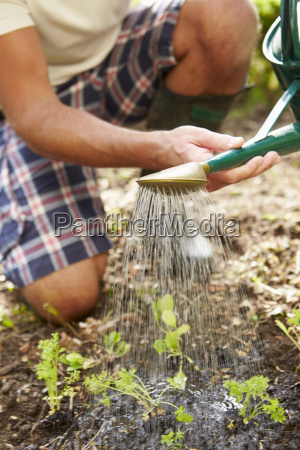 close up of man watering seedlings