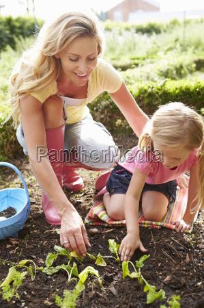 mutter und tochter anpflanzen von setzlingen